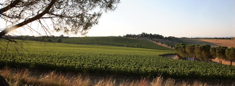 Vinhuset Carpineto sine vinranker